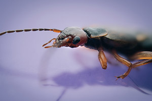 Buglife: uno sguardo a 42 megapixel nella vita degli insetti che popolano la nostra casa