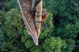 2016 Wildlife Photographer of the Year