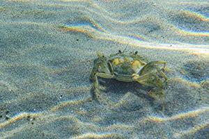 Lumix FT7: ecco come si comporta dentro e fuori dall'acqua