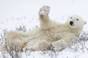 Comedy Wildlife Photography Awards 2018