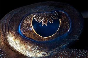 Ecco 40 spettacolari foto ''macro'' che mostrano le differenze degli occhi degli animali